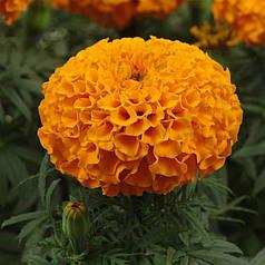 Семена Бархатцы Дискавери оранжевые F1 10 сем Cerny 5930