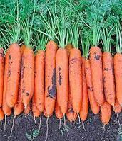 Семена моркови Монанта, Rijk Zwaan 1 кг