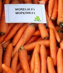 Среднеспелый гибрид моркови Морелия F1, Rijk zwaan Рийк Цваан семена крупная фасовка 1 000 000 семян (1.8-2.0)