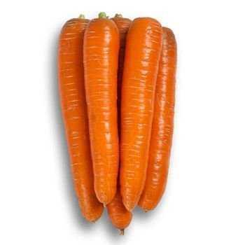 Семена моркови Морелия F1, Rijk Zwaan 25 000 семян (2.0-2.2)