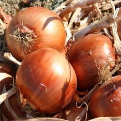 Семена лука Мундо F1 — лук желтый, репчатый, 250 000 семян