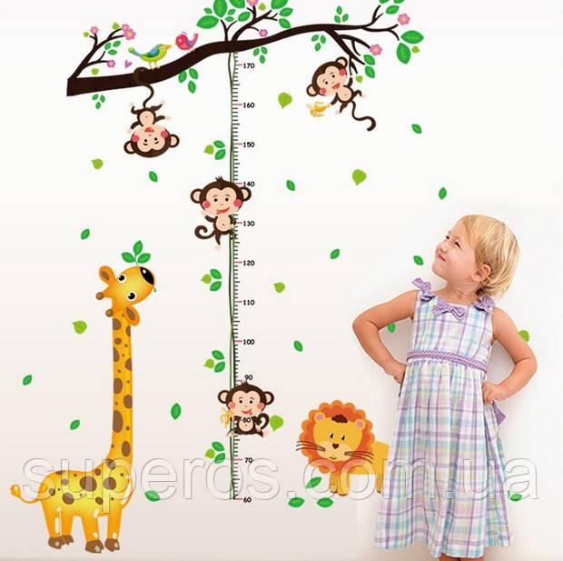 Интерьерная наклейка ростомер Жираф