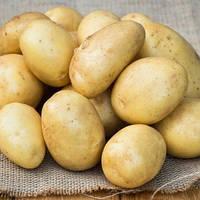 Картофель Лоперла 3кг, фото 1