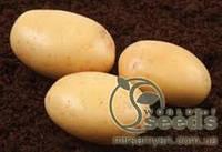 Картофель Нектар 3кг, фото 1