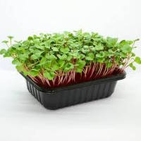 Лоток для выращивания  микрозелени высокий ( 55 мм), фото 1