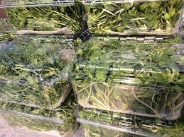 Лотки для упаковки микрозелени (микрогрин)