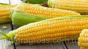 Купить семена кукурузы Глуманда