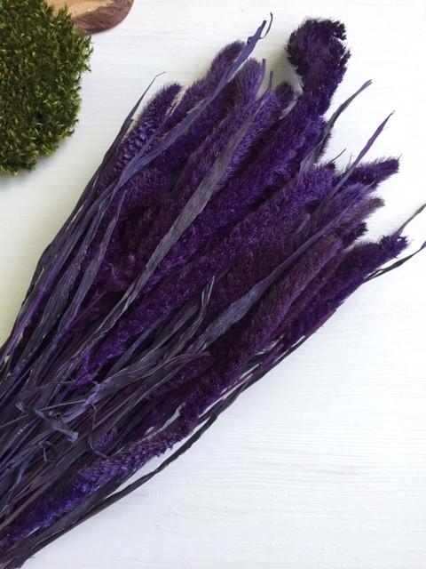 Сетария сухоцвет фиолетовая , крупная и пушистая( 100 гр )