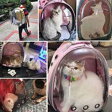 Рюкзак с иллюминатором для транспортировки кошек, дышащий прозрачный рюкзак для домашних животных, фото 3
