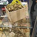 Равлики мариновані в соусі залиті олією 230г, фото 2