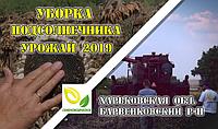 Уборка подсолнечника сорт ВНИИМК. Урожай 2019.