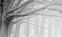 ЗД Фотообои Лес в тумане арт. 95213629