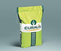 Семена кукурузы Euralis ЕС Сенсор ФАО 370