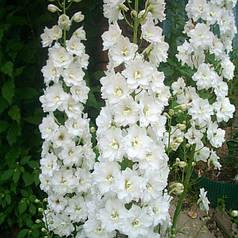 Семена Дельфиниум Конфетти смесь  0,1 г W.Legutko 5067