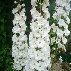Семена Дельфиниум многолетний Галахад 0,1 г W.Legutko 5068