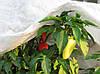 Агроволокно 23 білий 6,35*50 Посилений край, фото 4