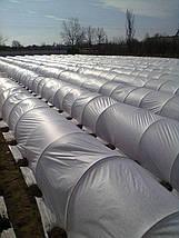 Агроволокно 30 белое 12,65*100, фото 3