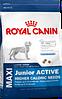 Royal canin Maxi Junior Active 4 кг
