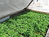 Агроволокно на метраж 23 белый 6,35 м Усиленный край, фото 4