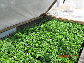 Агроволокно на метраж 40 белый 1,6 м, фото 3