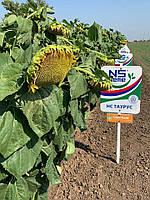 НС Таурус Насіння соняшника сербської селекції під євролайтінг фракція Екстра 10кг