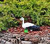 Садовая фигура Семья садовых аистов в гнезде №43 керамика, фото 6