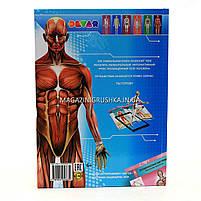 Книга для развития ребенка «Энциклопедия 4D Анатомия в дополненной реальности», фото 2