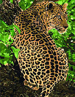 Картина по номерам - Леопард, ★★★★   ТМ Идейка