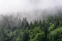 ЗД Фотообои Лес в тумане  арт. 294574169