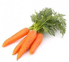 Польские семена моркови