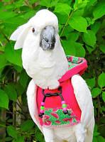 Одежда против ощипа у попугаев. Защитные костюмы от самоощипа у попугаев