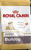 Royal Canin Bulldog Junior 3 кг