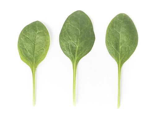 Скороспелый гибрид шпината Сильвервейл F1, Rijk Zwaan Профессиональные семена Голландия упаковка  25 000 семян