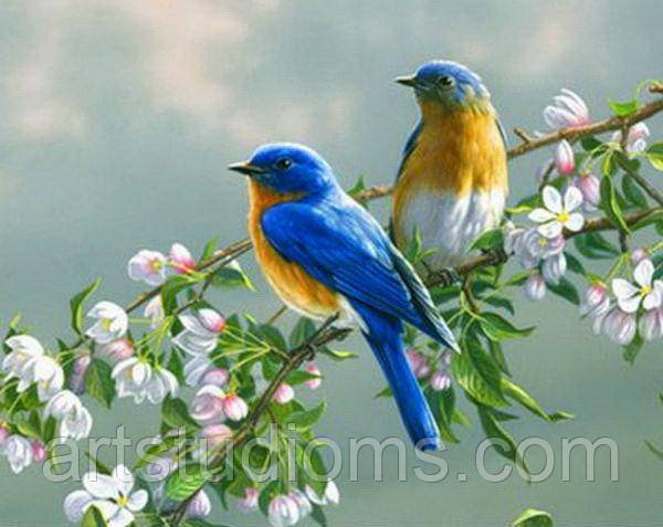 Картина по номерам животные. Птички на яблоне 50 х 65 см (с коробкой)