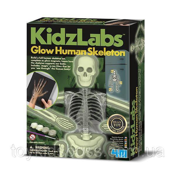Набор для творчества 4M Светящийся скелет человека (00-03375)