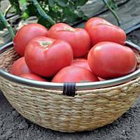 Семена томата индетерминантного Эсмира F1 1000 семян, Rijk Zwaan