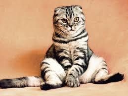 Brit Care лечебные корма для кошек