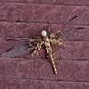 Заколки для волос красивые стрекоза, фото 7