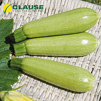 Семена кабачка Супер Дония F1 (Clause), 5 семян — ранний гибрид, светлый