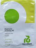 Анатолія F1 10 шт насіння баклажан Rijk Zwaan, Голландія, фото 2