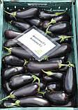 Анатолія F1 10 шт насіння баклажан Rijk Zwaan, Голландія, фото 3