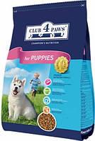 Club 4 Paws для щенков