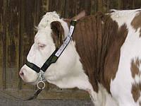 Ошейники, Цепи, Хомуты для привязи скота