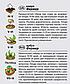 """Насіння кавуна раннього """"Фермер"""" (2 г) від Agromaksi seeds, фото 2"""