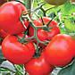"""Насіння томату """"Тобольськ"""" F1 (10 насіння) від Bejo, фото 2"""