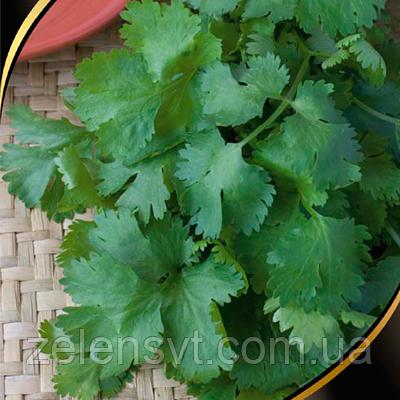 """Насіння коріандру """"Бородіно"""" (2 г) від Agromaksi seeds"""