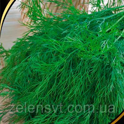 """Насіння кропу """"Зелений сніп"""" (3 г) від Agromaksi seeds"""