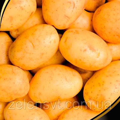 """Насіння картоплі """"Ассоль"""" (0,01 г) від Agromaksi seeds"""