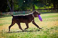PULLER MAXI тренировочный снаряд для крупных и средних пород собак, Ø30 см, фото 2