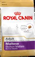 Мальтийская болонка старше 10 месяцев 0.5 кг